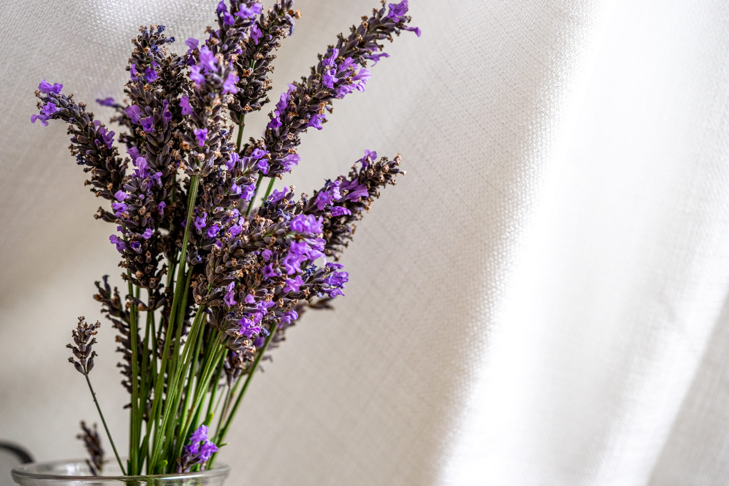 A bouquet of lavender in a vase
